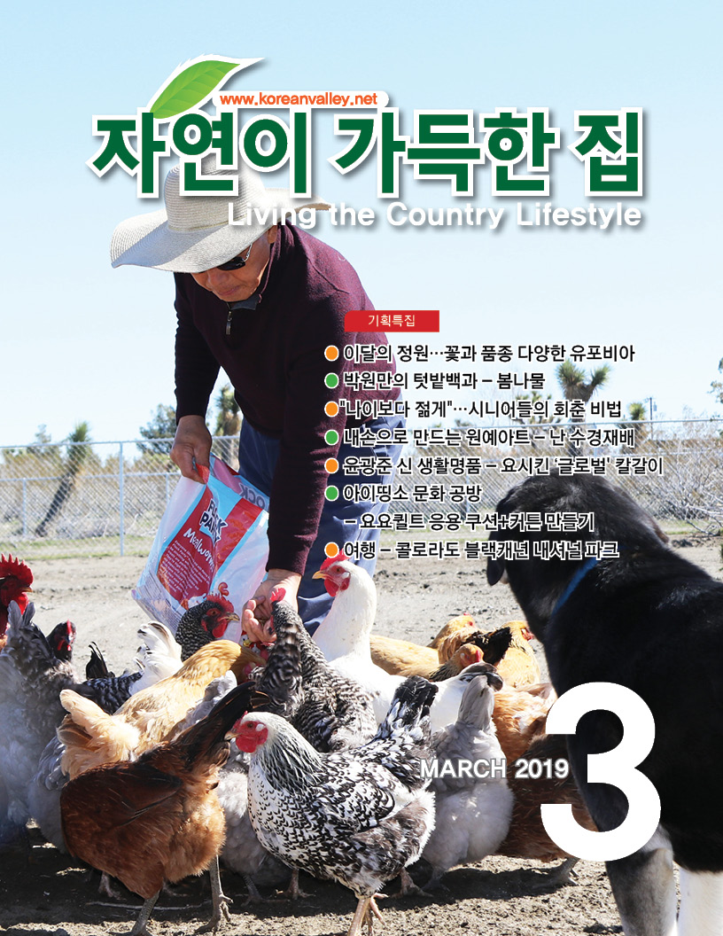 cover(web)