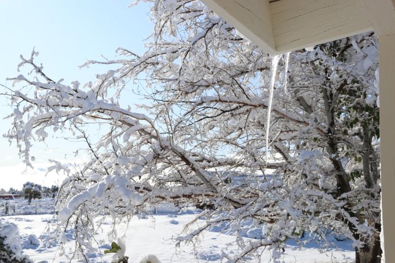 snow-11-28-2019